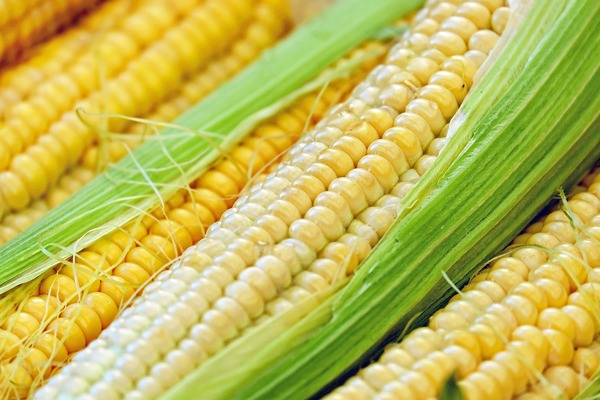 Scattering corn, a fool-proof tactic to attract mates.