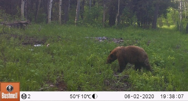 How to Tell Black Bears from Grizzly Bears