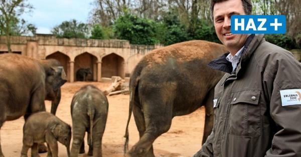 Ende der Elefantenzucht: CDU kritisiert Zoo-Pläne