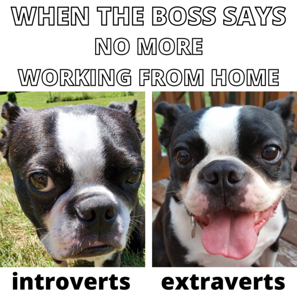 """Joe is both introverted and extraverted. He's introverted when you tell him to do something (like """"sit""""), and he's extraverted when you give him food."""
