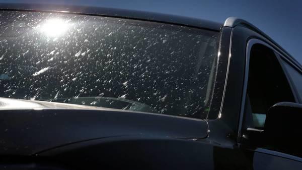 Autos und Insekten: Deshalb sollten Sie die Reste zeitnah entfernen
