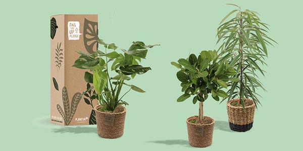 Plantenbox: een plant per post