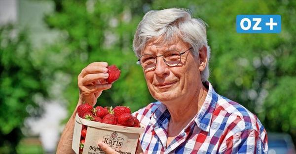 Täglich 500 Gramm Früchte von Karls: So fühlt sich der OZ-Reporter bei der Erdbeer-Studie