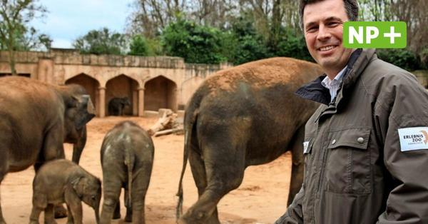 Zoo Hannover: Weiter Streit um die Elefanten