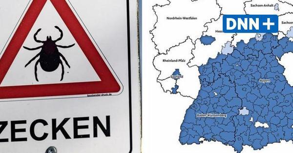 Zeckengefahr in Sachsen: Immer mehr Landkreise werden Risikogebiete