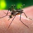 Blocking how the malaria parasite suppresses the immune response