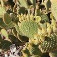 No hay muchos jardines públicos con cactus en Zaragoza. Este me pilla cerca de donde paso, pero tengo que desviarme…