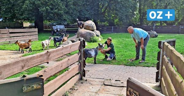 Schlösser im Grimmener Tierpark durchtrennt: Tiere brechen aus und verletzen sich