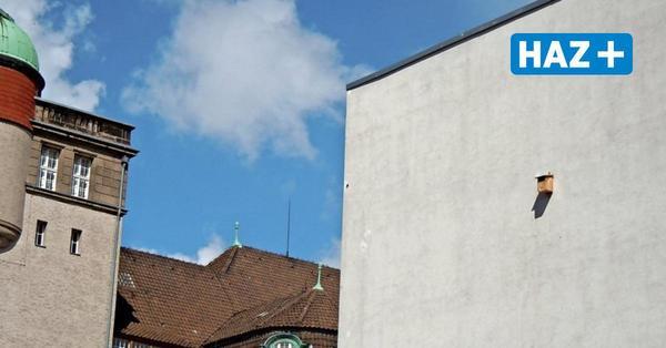 ... das Rätsel um das Vogelhaus der Bismarckschule