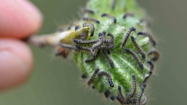 Tiny climate worlds: Animals use microclimates to survive