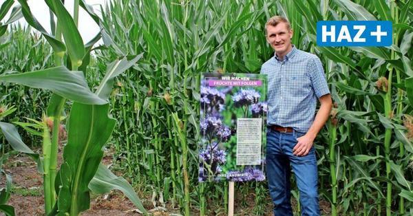 Isernhagen: Neues Maislabyrinth mit politischer Botschaft eröffnet am Wochenende