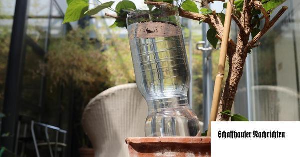 So überleben Ihre Pflanzen die Sommerferien