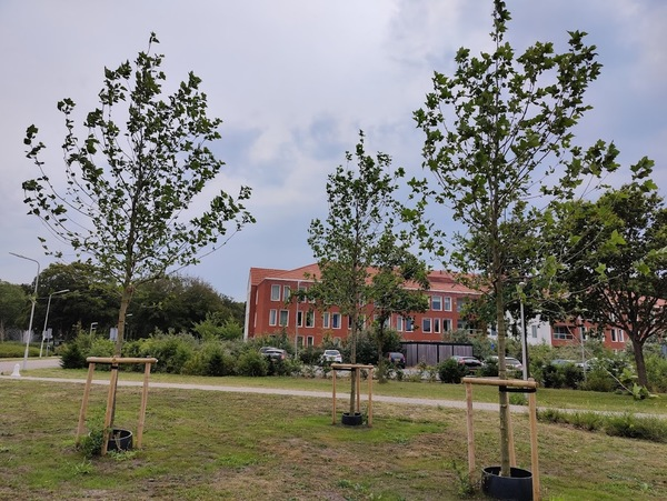 Parnassia heeft nieuwe bomen geplant als 'symbolische compensatie'. Foto door nieuwsuitcastricum.nl
