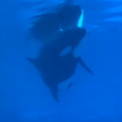 Call for Marineland to free last surviving orca after 'heartbreaking' video surfaces