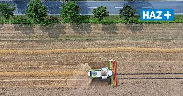 Drei Mann, ein Mähdrescher: Wie die Weizenernte für junge Landwirte zur Teamarbeit wird