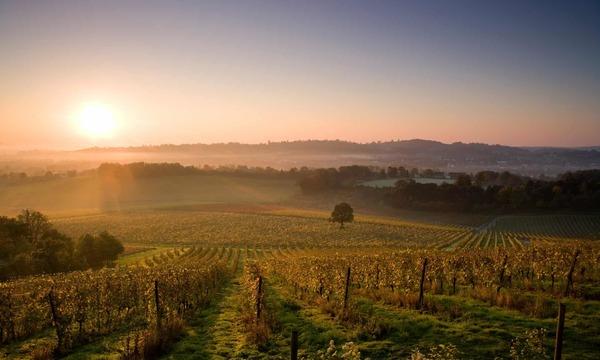Grape escapes: 10 amazing UK vineyard hotels and lodges