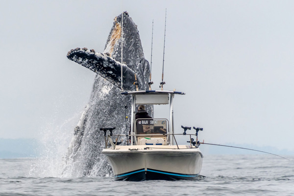 Photographer Douglas Croft was in California's Monterey Bay on April 27th back in 2019 when the memorable moment occurred.