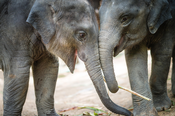 Baby elephants might be the best antidepressant there is.