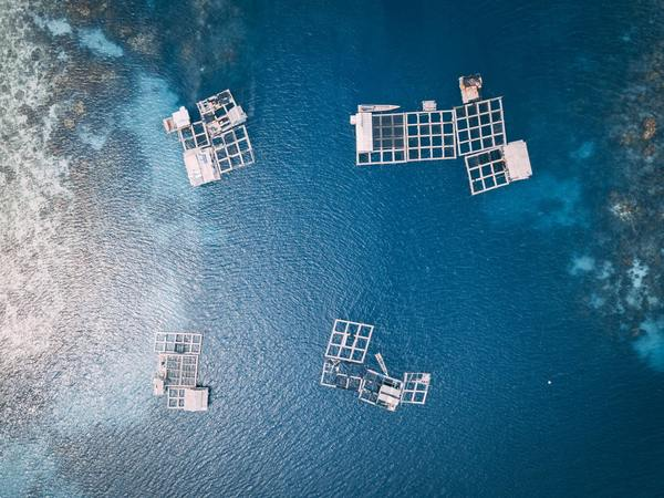 The Rise of Aquaculture and the Threat of Floating Feedlots
