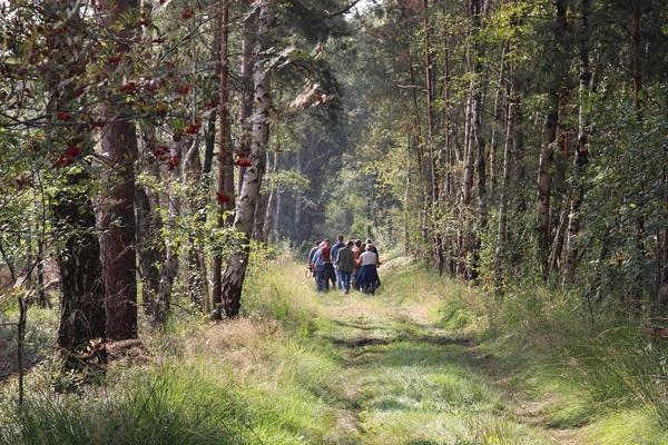 Bei einer geführten Wanderung lässt sich viel über das Moor erfahren. (Foto: Doreen Juffa/Region Hannover)