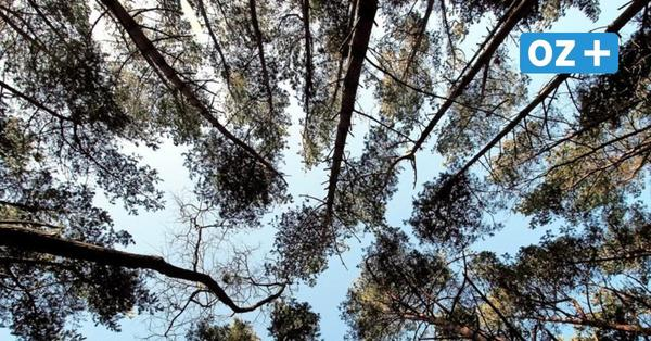 Kühlungsborn: Initiative Zukunft will Arbeitsgruppe Stadtwald gründen