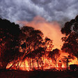 Wildfires were so hot they cooled the planet