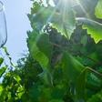 Großveranstaltungen und Corona: Weinmarkt als Mutmacher