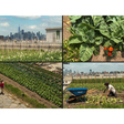 From Singapore's Forest To Farms On NYC Rooftop, World Cities Uprooting The Urban Jungle