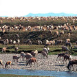 Interior kicks off new review of ANWR drilling