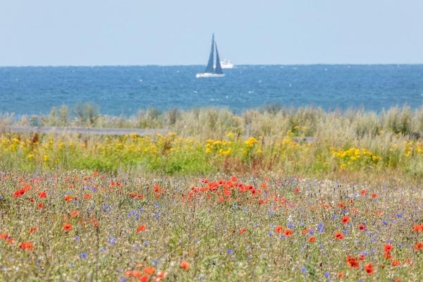 Sommer an der Ostsee in Ahrenshoop (Foto: Klaus Haase)