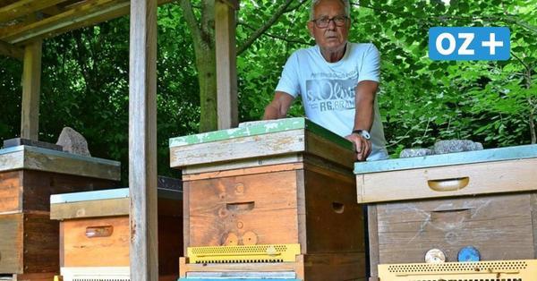 Hobbyimker aus Greifswald: Deswegen wollen viele ihren Honig selbst machen