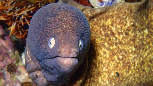 Man Attempts To Cure Constipation Via An Eel In His Anus, Nearly Dies | IFLScience