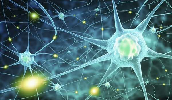 How do stress hormones act upon the brain? - Tech Explorist