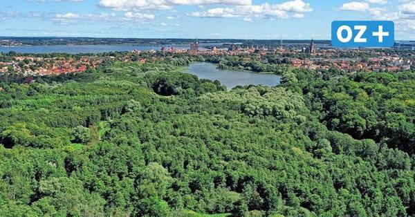 Blick ins Jahr 2045: So grün könnte Stralsunds Zukunft aussehen