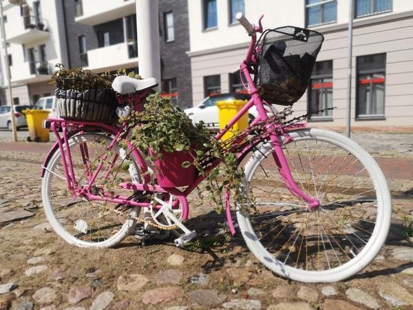Blumenfahrrad am Markt in Bad Doberan (Foto: Lisa Walter)