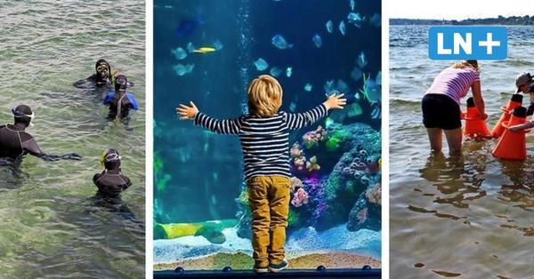 Tauchgondel, Schnorcheln, Sea Life: So erleben Sie die Unterwasserwelt in der Lübecker Bucht