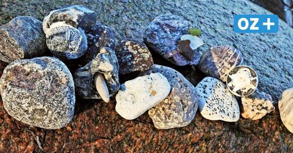 Experten bewerten rätselhafte Funde vom Reriker Strand