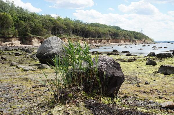 Die Steilküste auf der Insel Poel (Foto: Dieter Engel)