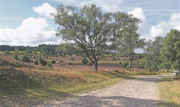 Heideblüte ist diesmal pünktlich - Heidekreis - Walsroder Zeitung