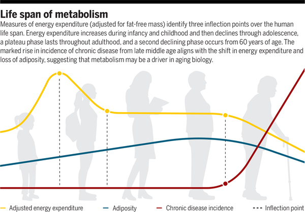 Taking the long view on metabolism | Science
