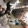 Animal activists occupy a pig farm in Saint-Hyacinthe and are arrested   CTV News