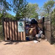 Tourists' garbage kills deer at Zion National Park, rangers say