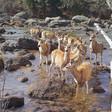 Haaland backs Wyoming wildlife migration strategy