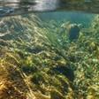 Prise de position du VSA sur le « Plan de mesures pour une eau propre »