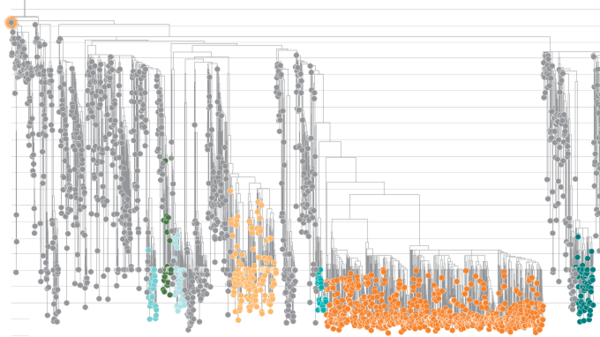 New SARS-CoV-2 variants have changed the pandemic. What will the virus do next?   Science   AAAS