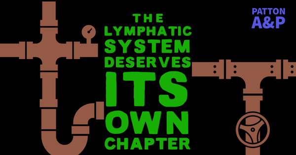Anatomy & Physiology: The Lymphatic System Deserves Its Own Chapter