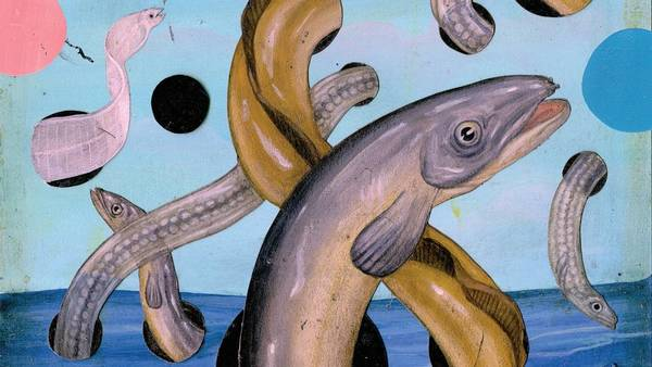 Where Do Eels Come From? | The New Yorker