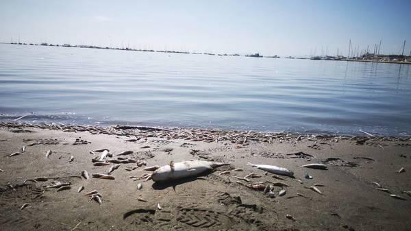 Mar Menor in Spanien: riesiges Fischsterben in Europas größter Salzwasserlagune