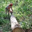 Trockenheit setzt dem Rathenower Stadtwald zu