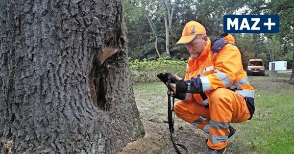 Bäume und Käfer – Spagat zwischen Naturschutz und Straßensicherheit